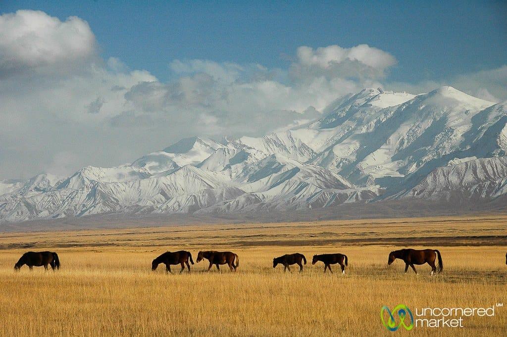 Horses queue up in the fields near Pik Lenin between Sary Tash and Sary Moghul, Kyrgyzstan. © www.uncorneredmarket.com