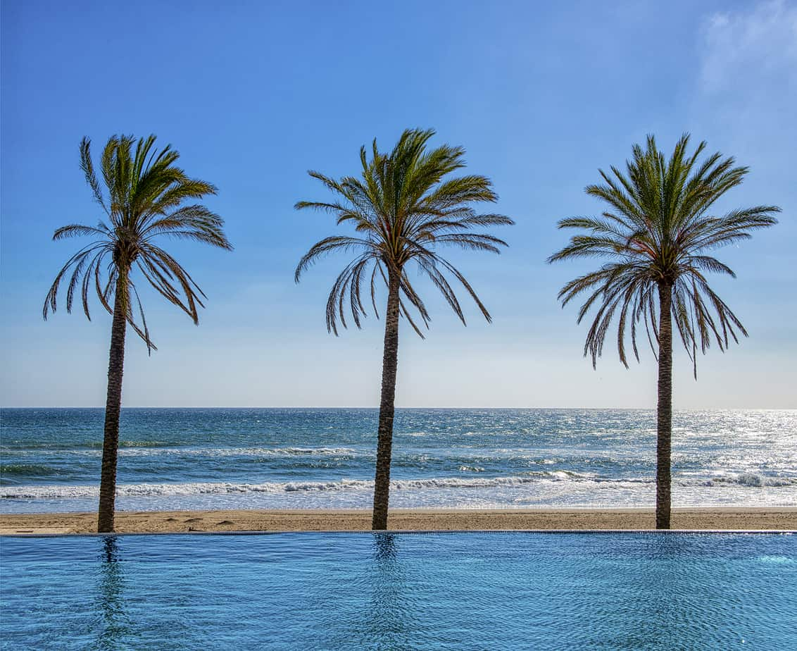 romantic Marbella Spain - palm trees
