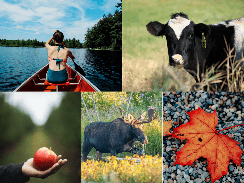 collage of top things to do in new england - apple picking, canoeing, cows, moose, and fall leaf