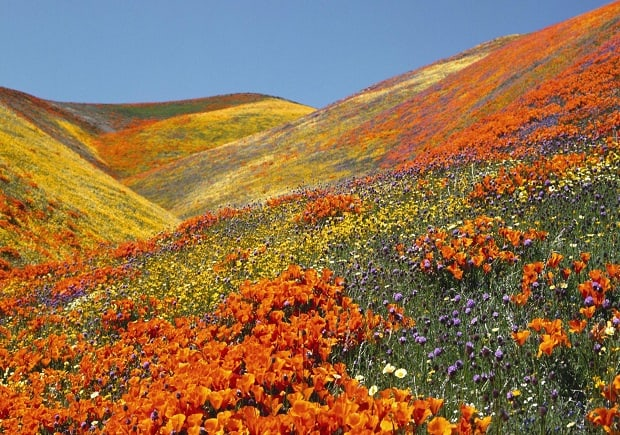 The Best Places To See Flowers In Spring