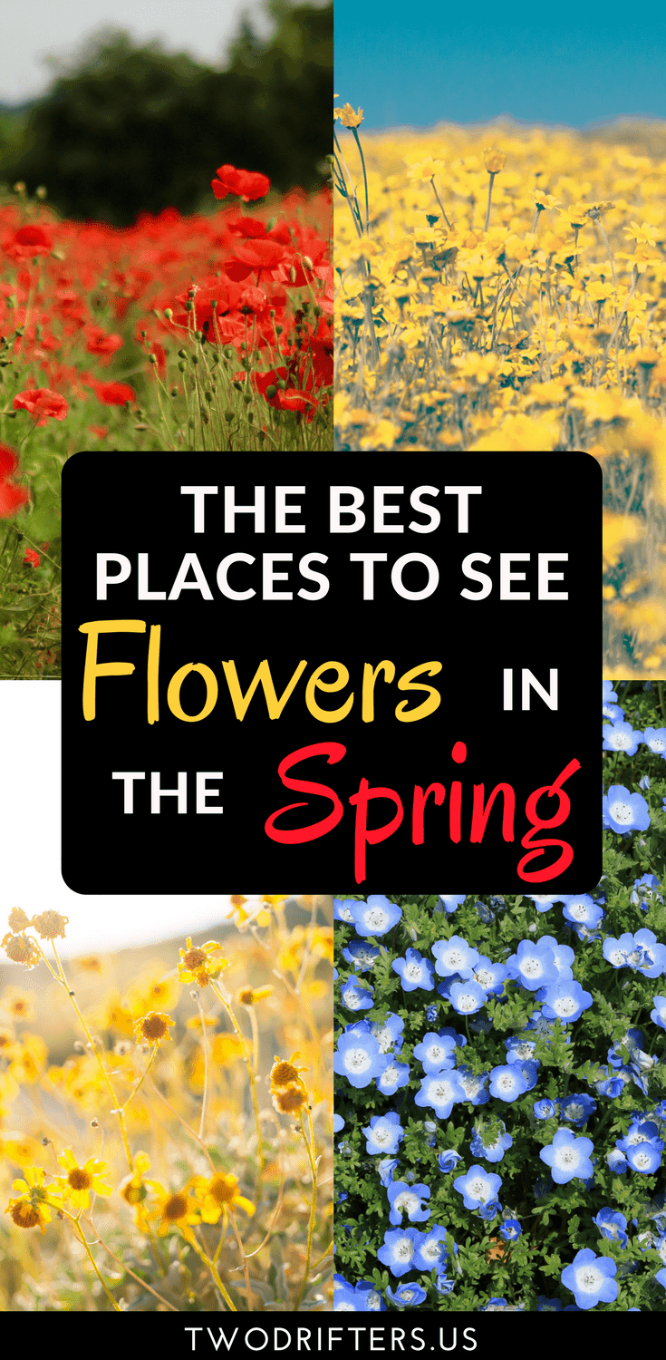 The best places to see flowers in spring pin this post to save for later mightylinksfo