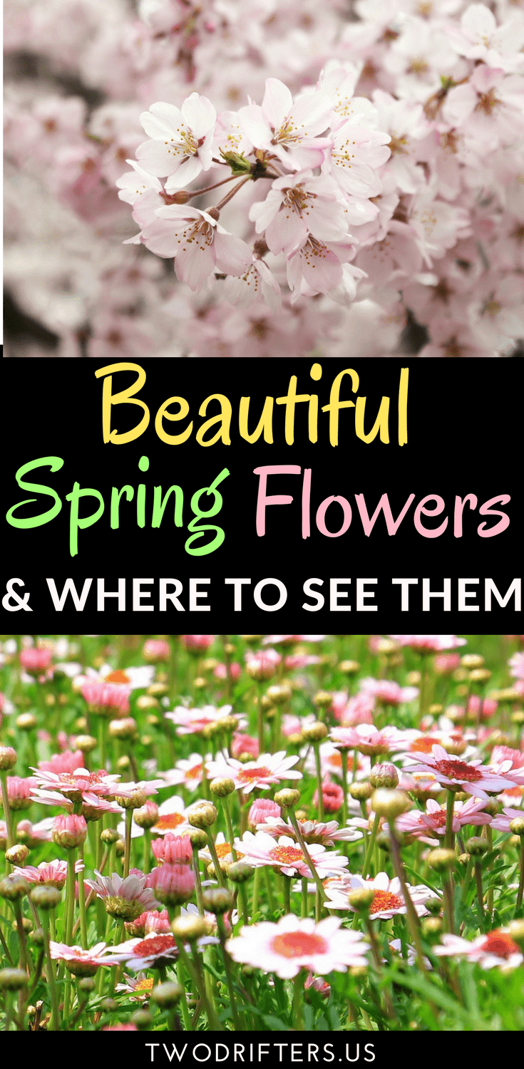 The best places to see flowers in spring save mightylinksfo