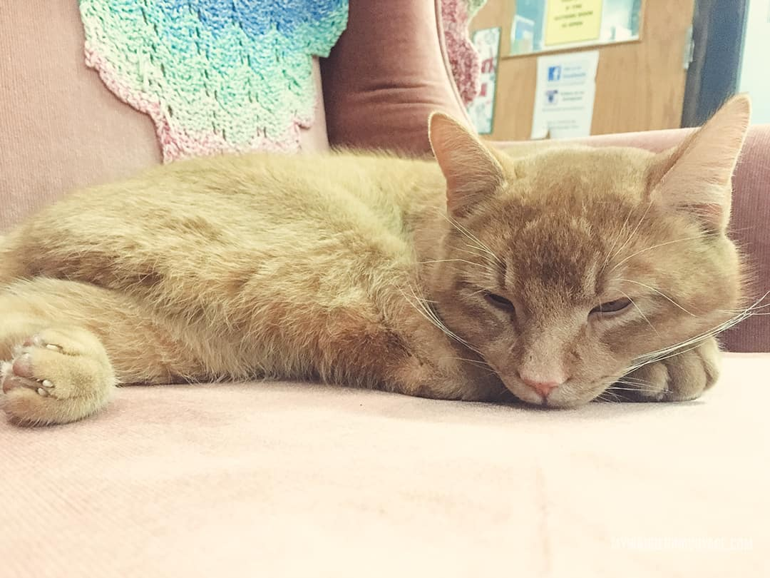 My Kitty Cafe Wyndham Street North Guelph On