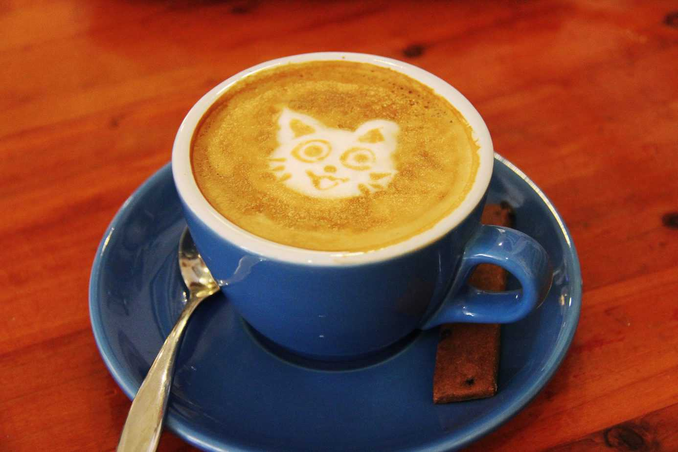 cat cafes in the us and canada