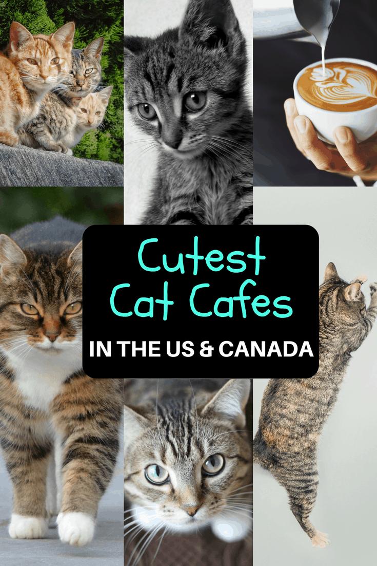 Cat Cafe Milwaukee