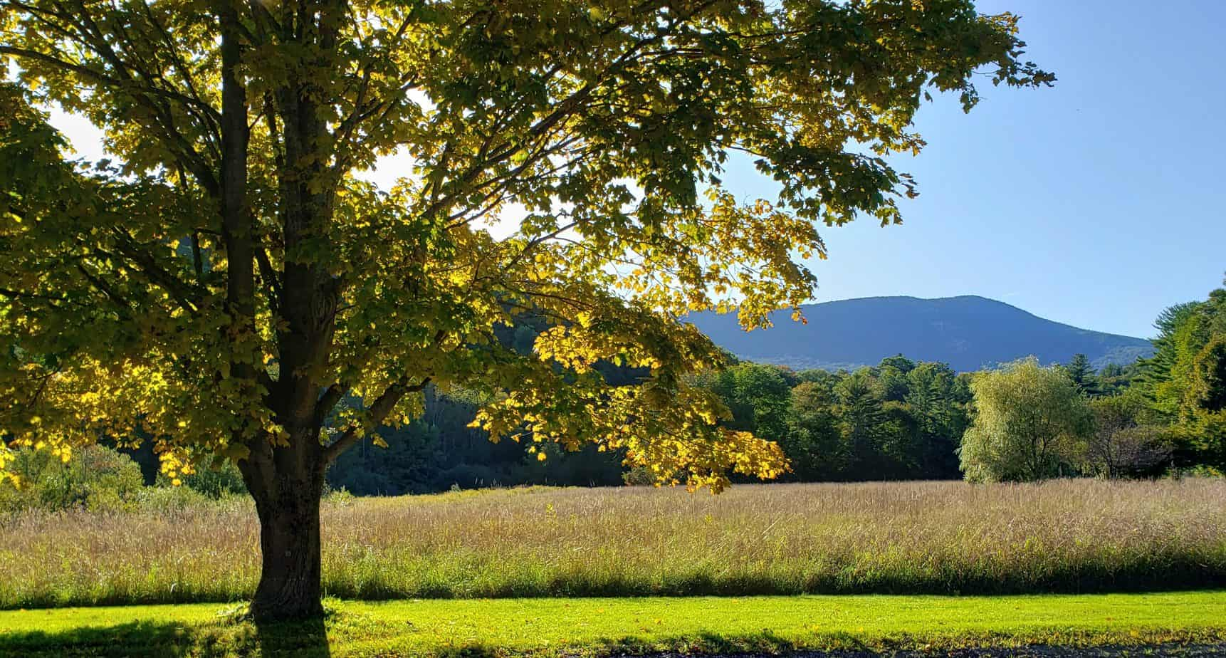 vermont scenery - golden hour with maple tree and blue mountain in distance -things to do in manchester vt
