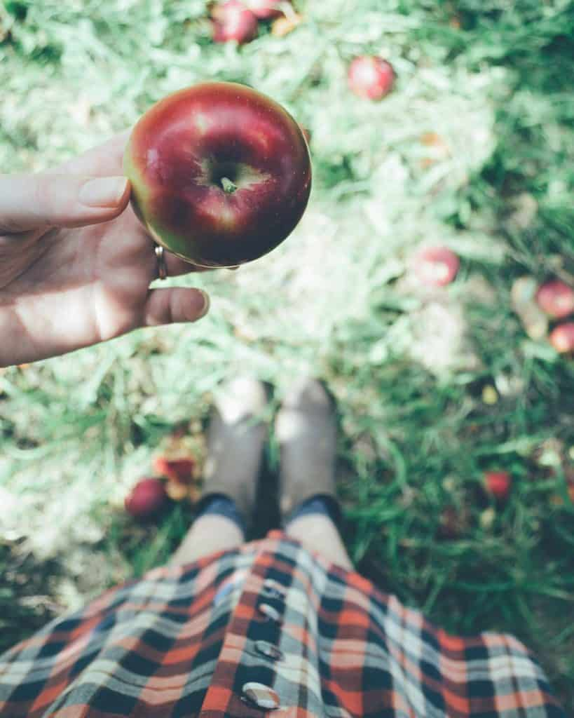 hand holding apple - apple orchards in vt