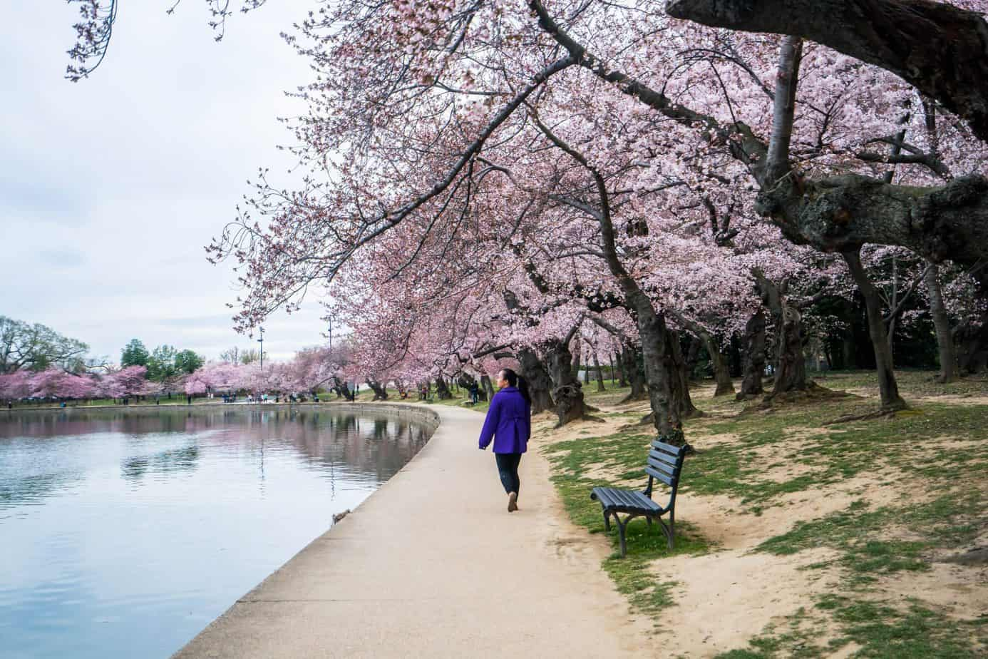 romantic things to do in DC - header image - girl walking near water under cherry blossoms
