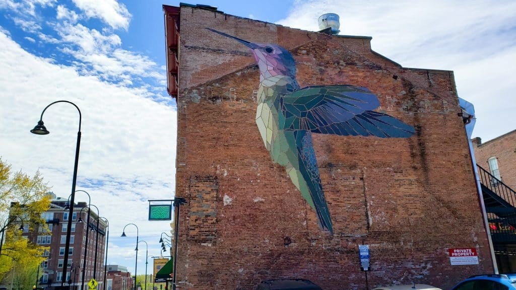 hummingbird street art on brick wall in city - burlington vt things to do