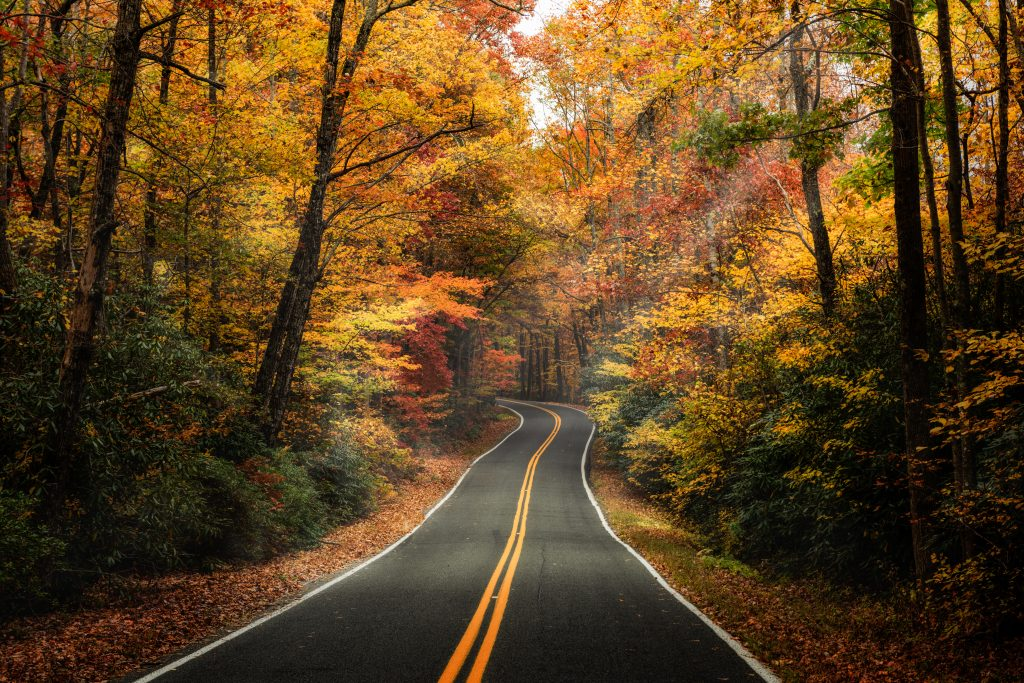colorful fall trees close to a roadway - an atmospheric picture