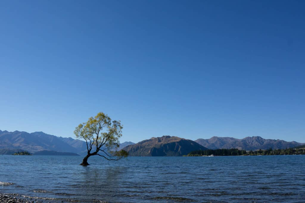 lake wanaka NZ and its famous tree - perfect for a honeymoon in new zealand