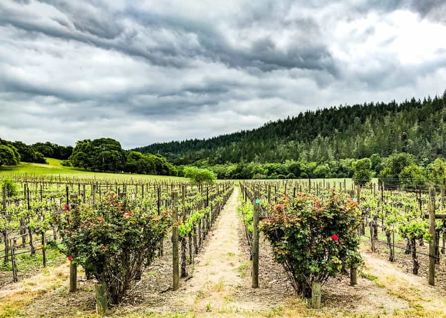 romantic things to do in napa valley header image - wine vineyard in california